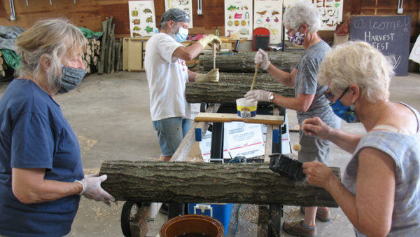 This is a picture of volunteers creating mushroom logs for Silverwood Park's mushroom workshop.