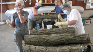 This is a picture of volunteers creating mushroom logs for Silverwood Park's mushroom workshop.