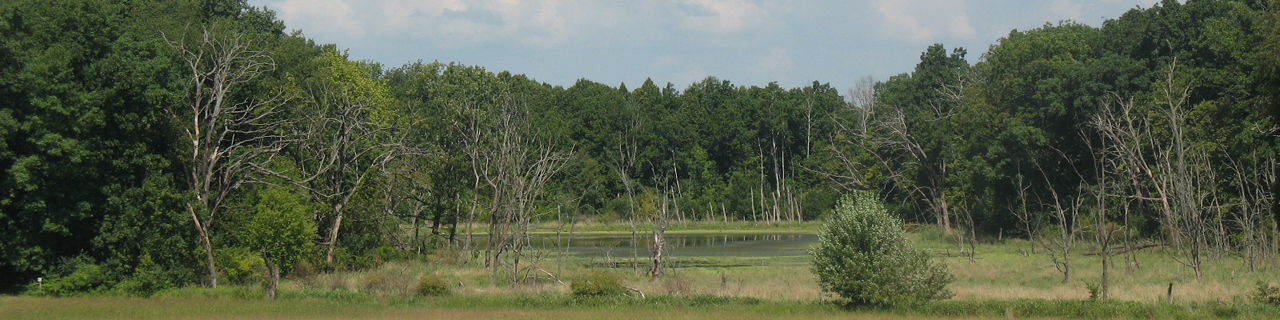 This is a picture of wetlands at Silverwood Park