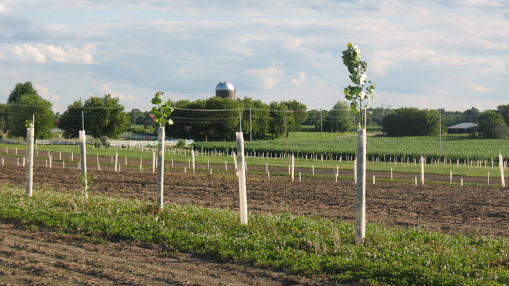 This is a picture of the row-cropping demonstration area at Silverwood Park